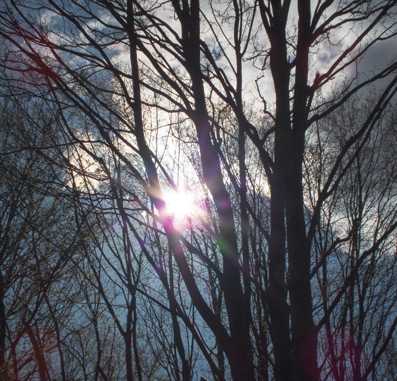 im Wald Bäume
